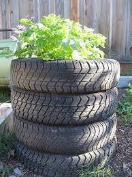 Beat the Chipocolypse! – Use Tyres to Grow Potatoes